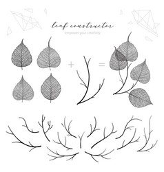 big set of leaf veins branch leaf flower fall vector image