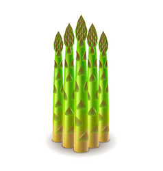 fresh asparagus isolated on white vector image