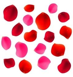 Red Rose Petals vector
