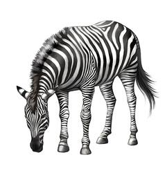 Zebra eating vector image
