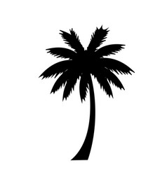black silhouette of palm tree icon on white vector image