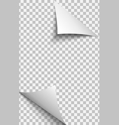 Curled corners transparent paper sheet vector