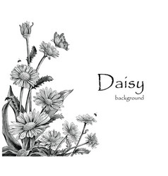 Daisy flowers hand drawing vintage on white vector