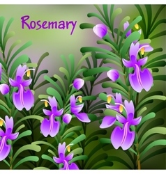 Rosemary background Useful green herbs delicious vector