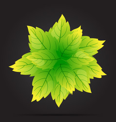 the leaves are green circle on a black background vector image