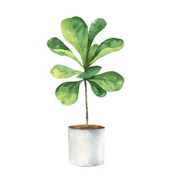 Watercolor clipart with a ficus lyrata in a vector