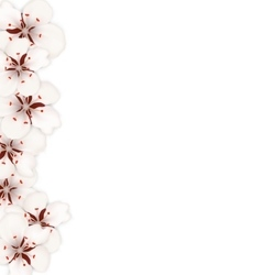 Sakura Flowers Floral Banner for Springtime vector image vector image