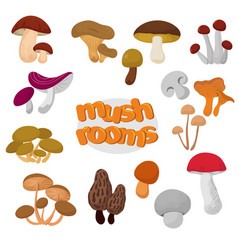 forest summer and autumn cartoon edible mushrooms vector image