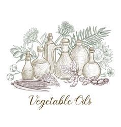 Drawing vegetable oil vector