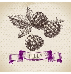 Raspberry Blackberry Hand drawn sketch berry vector image