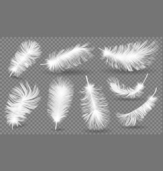 Realistic fluffy feathers falling twirled plumage vector
