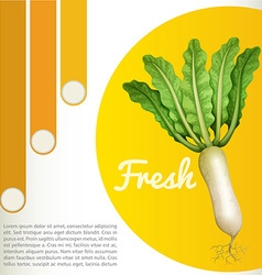 White radish with text vector