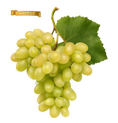 white sweet table grapes fresh fruit 3d realistic vector image