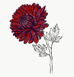 lovely isolated big red flower grafical paint vector image