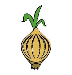 drawing onion vegetable nutrition sprout icon vector image vector image