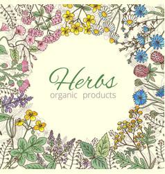 medicinal botanical and healing beauty herbs from vector image