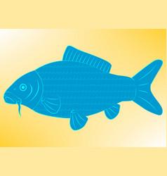 drawing carp fish vector image