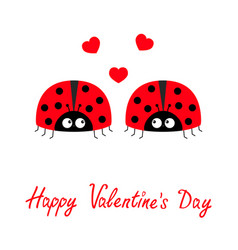 happy valentines day two red lady bug ladybird vector image