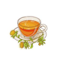 safflower tea vector image