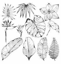 Tropical plants set of with vector