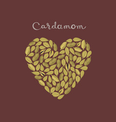 cardamom pods in a heart shape vector image