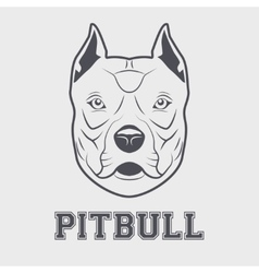 Pitbull head mascot vector image