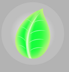 green leaves isolated on baclground vector image