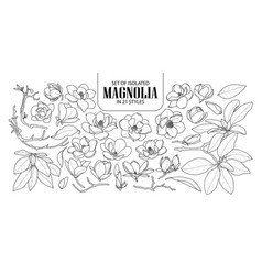 set of isolated magnolia in 21 styles cute hand vector image