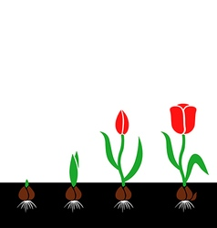 tulips cycle color vector image
