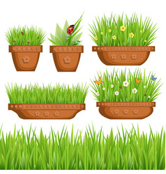 green grass in pots vector image vector image