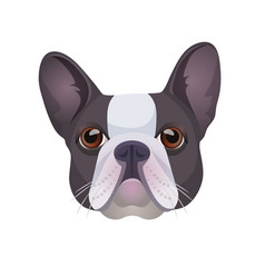 Bulldog face colored in grey and white vector