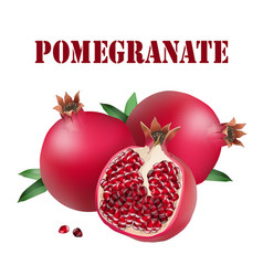 Fruit pomegranate white background image vector