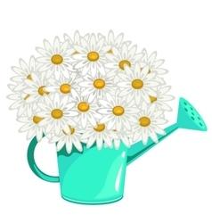 Bouquet of daisies in green garden watering can vector image