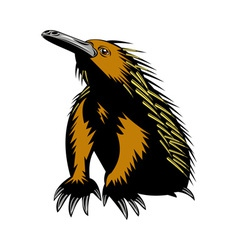 spiny anteater or echidna vector image