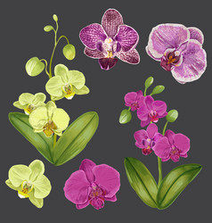 Exotic orchid flowers set tropical floral element vector