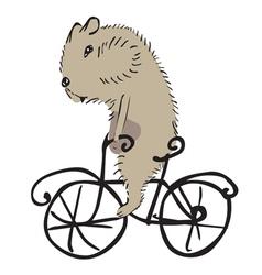 hamster on a bike vector image