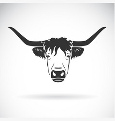 Highland cattle cow head design on white vector