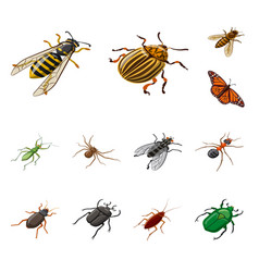 isolated object insect and fly sign set of vector image