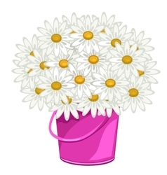 Large bouquet of daisies in pink pot flowers vector image