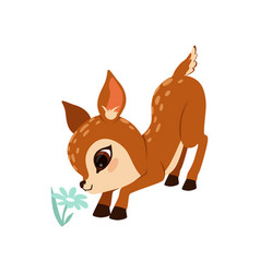 cute little fawn character sniffing flower vector image