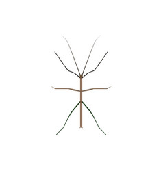 insect icon in flat style isolated on white vector image