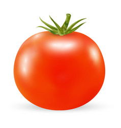 real 3d tomato on a white background vector image