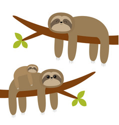 sloth hanging on tree branch leaf cute cartoon vector image