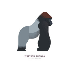 wild western africa gorilla zoo animal isolated vector image