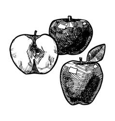 apple vector image vector image