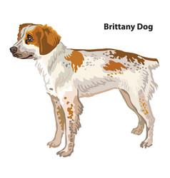 Colored decorative portrait brittany dog vector