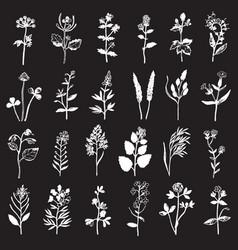 Herbal stamp set vector