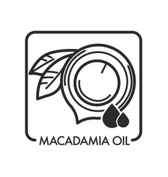 Macadamia oil special ingredient used in vector
