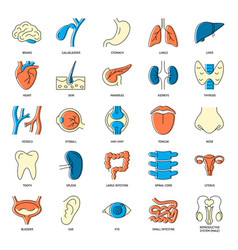 Medical collection human organs icons in line vector