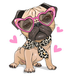 Pug dog with pink glasses and scarf isolated vector